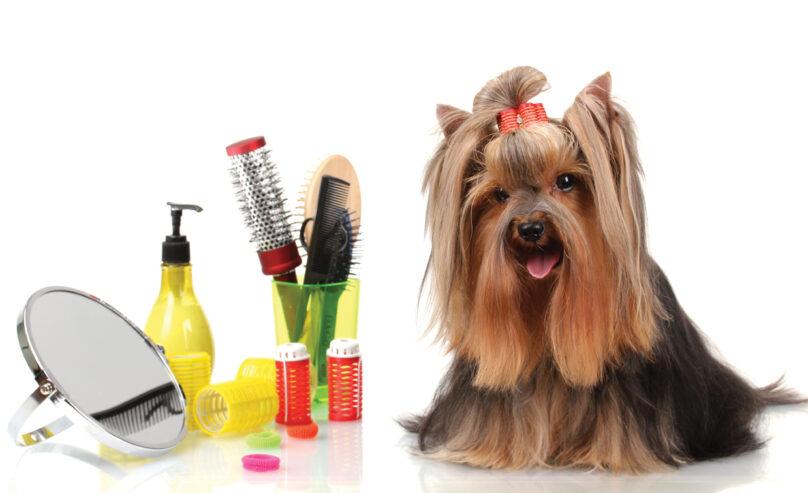Dog-Grooming-Basic-Tips